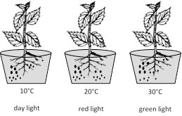 NEET Biology Photosynthesis And Translocation Of Organic