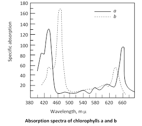 Absorption and action spectra : The curve representing the