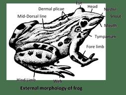 Internal morphology