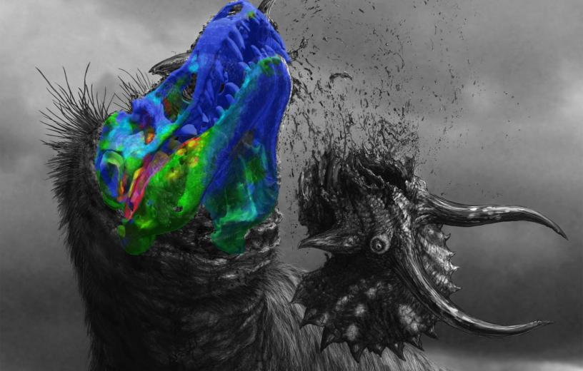 Tyrannosaurus Rex 3D Imaging