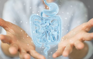 Human intestines, digestive tract for Crohn's disease, ulcerative colitis, IBD