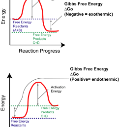 the y axis reflects the free energy of the reactants a b and products c d the x axis reflects the progress of the reaction as the path between  [ 2075 x 2687 Pixel ]
