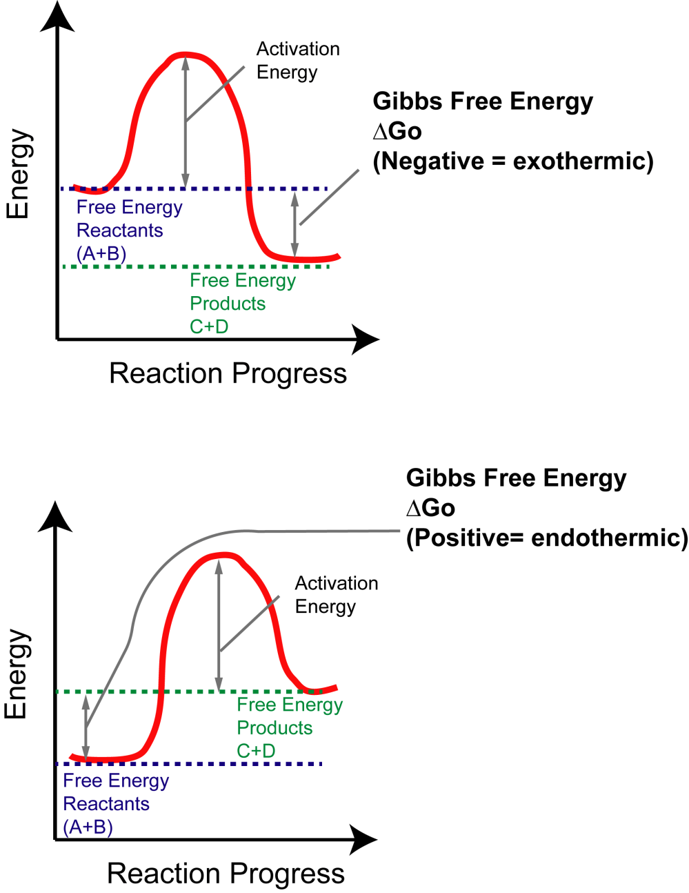 medium resolution of the y axis reflects the free energy of the reactants a b and products c d the x axis reflects the progress of the reaction as the path between