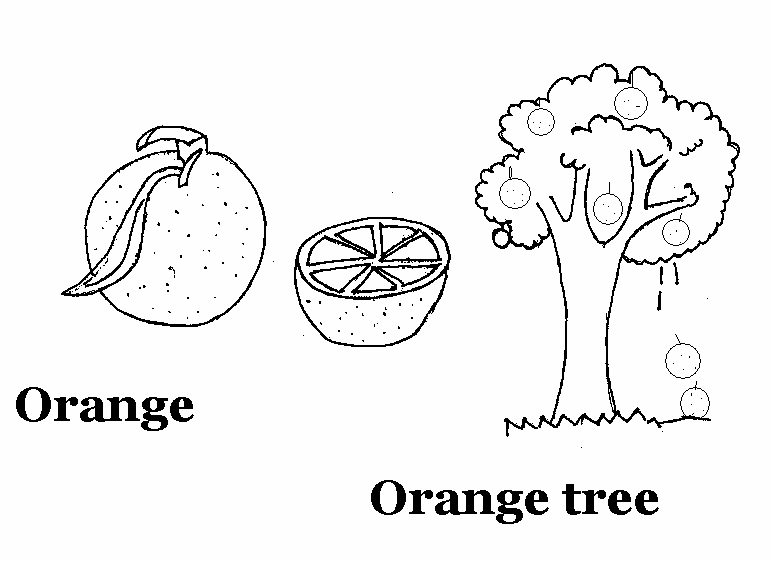 Orange coloring printable page for kids