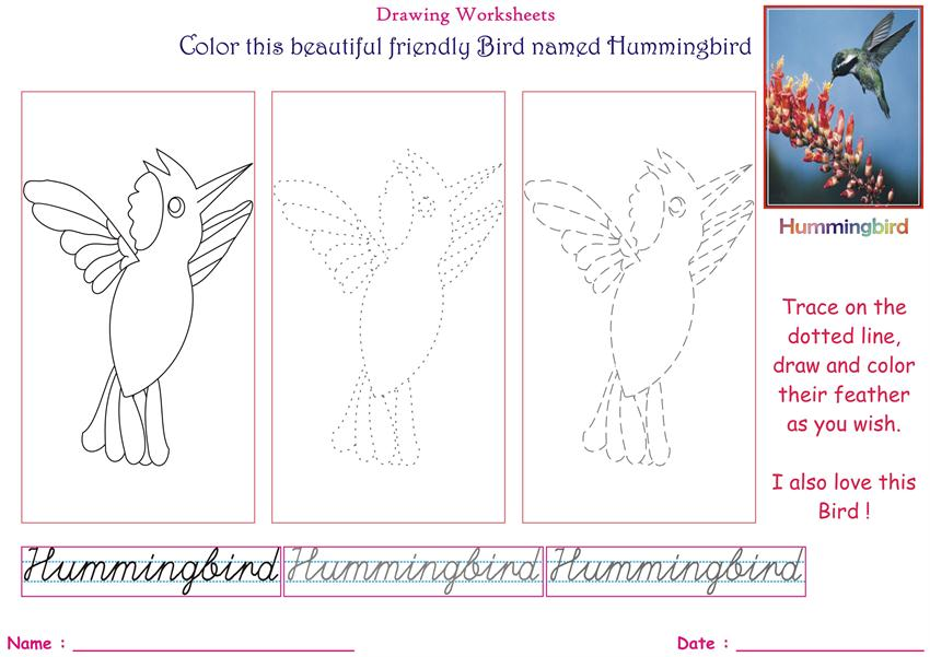 Birds Coloring Pages For Kids Hummingbird