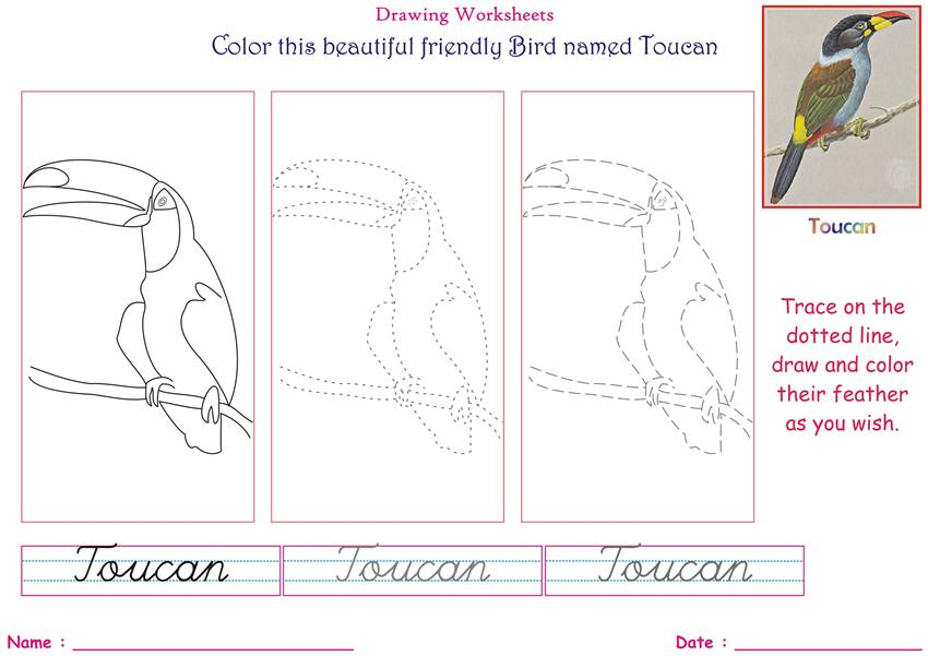 Birds Coloring Pages For Kids Toucan