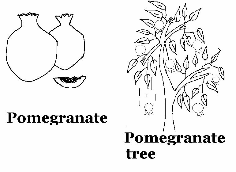 Pomegranate coloring printable page for kids
