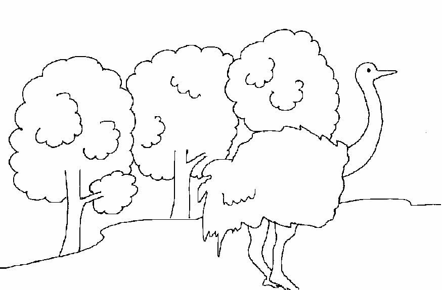 Coloring pages of various birds for kids