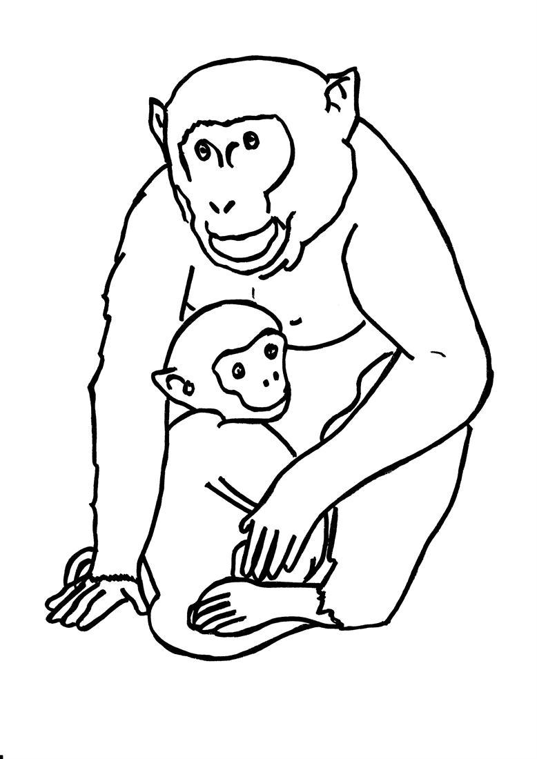 Gorilla coloring printable page