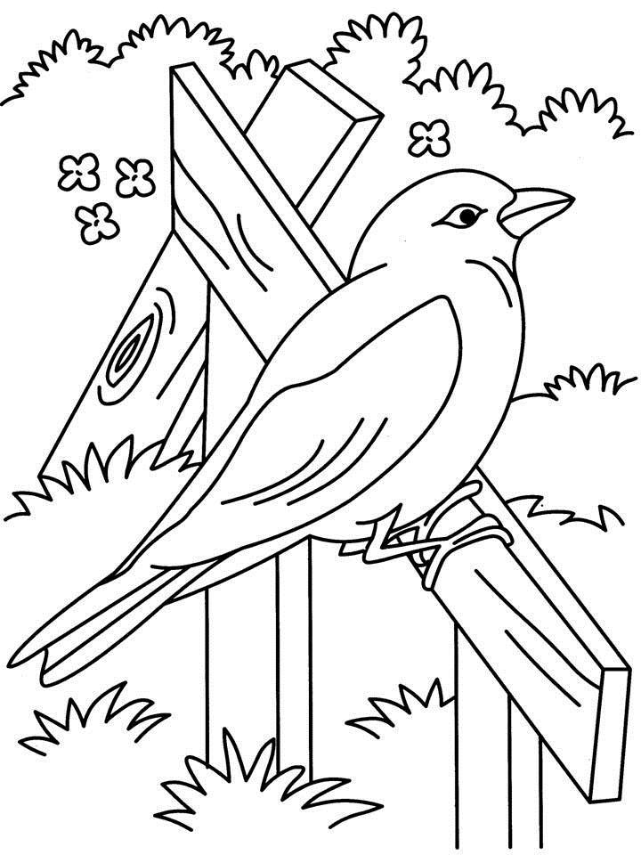 Beautiful bird coloring page
