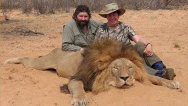 Résultats de recherche d'images pour «Elephant Lion Trophy Hunting images»