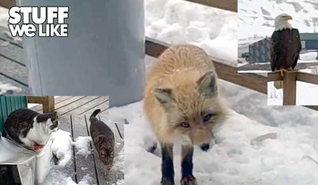 An Eagle, Fox 2 Cats, and a Woman – Best Friends For Life