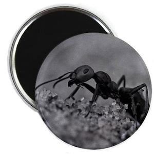 Searching Ant Magnet