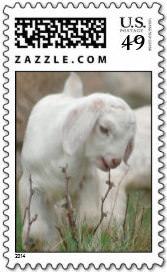 Baby Goat Postage Stamp
