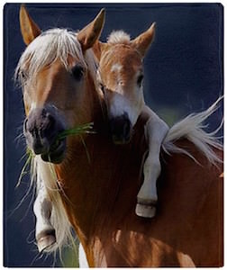 Mom And Baby Horse Throw Blanket