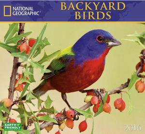 Backyard Birds 2016 Wall Calendar