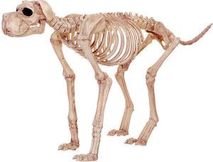 Large Dog Skeleton For Halloween