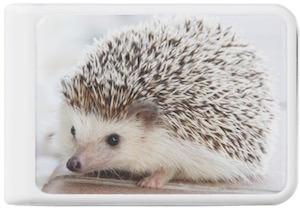 Baby Hedgehog Power Bank
