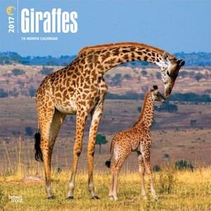 Giraffes Wall Calendar 2017