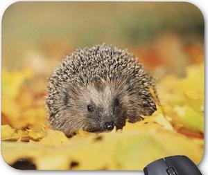 Hedgehog In Leaves Mousepad