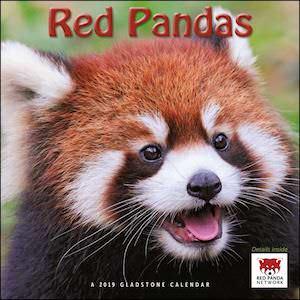2019 Red Pandas Wall Calendar