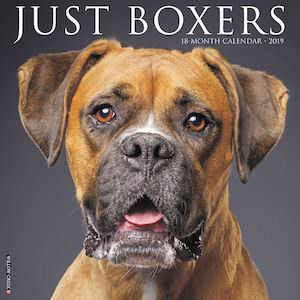 2019 Just Boxers Wall Calendar
