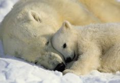 ice-king-polar-bear (14)