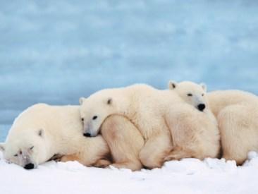 ice-king-polar-bear (4)