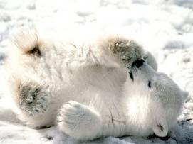 ice-king-polar-bear (5)