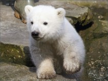 ice-king-polar-bear (8)