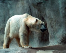 ice-king-polar-bear (9)