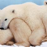 15+ Ice King Polar Bear HD Wallpaper Pack For Animal Lovers