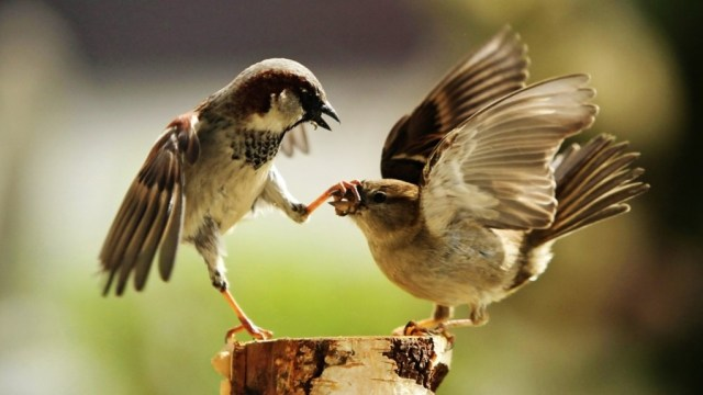 bird-wallpapers-stugon.com (4)