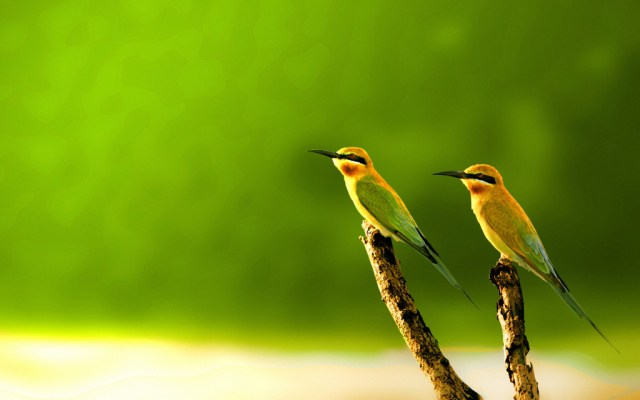 bird-wallpapers-stugon.com (5)