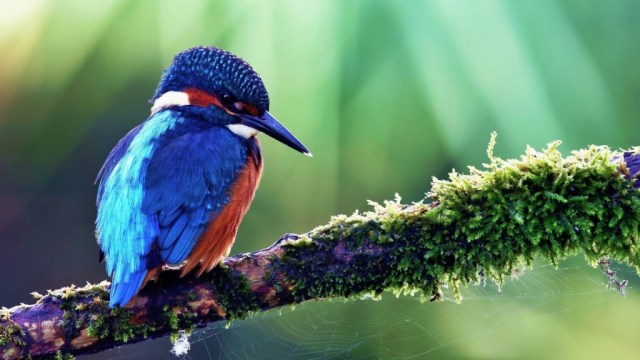 bird-wallpapers-stugon.com (6)