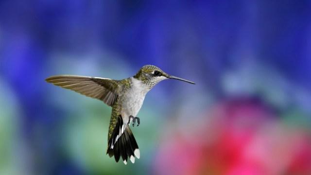 bird-wallpapers-stugon.com (8)
