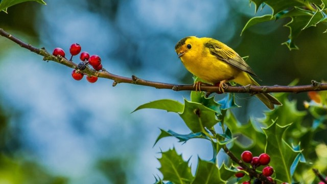 bird-wallpapers-stugon.com (9)
