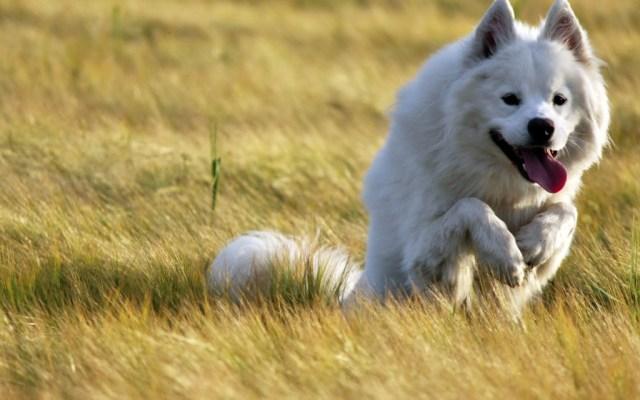 dog-wallpaper-collection-stugon.com (12)