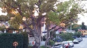 Chandeleir Tree - Stupid Vacations