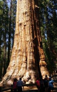Largest Tree on Earth