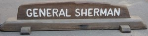 General Sherman - World's Largest