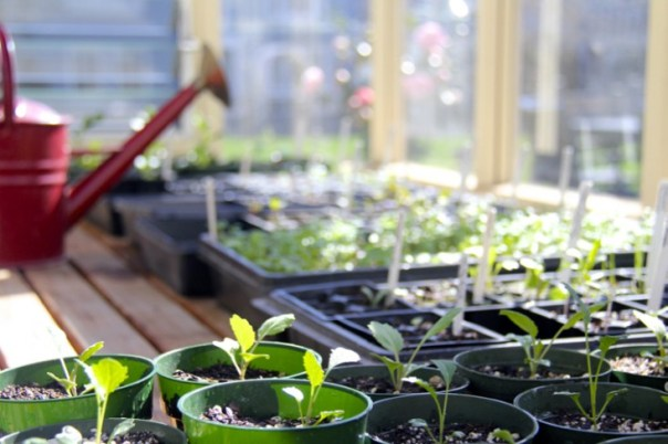 gardenista_mtp_seedlings