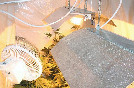 Kirchheim CannabisPlantage entdeckt  Polizeibericht  Stuttgarter Nachrichten