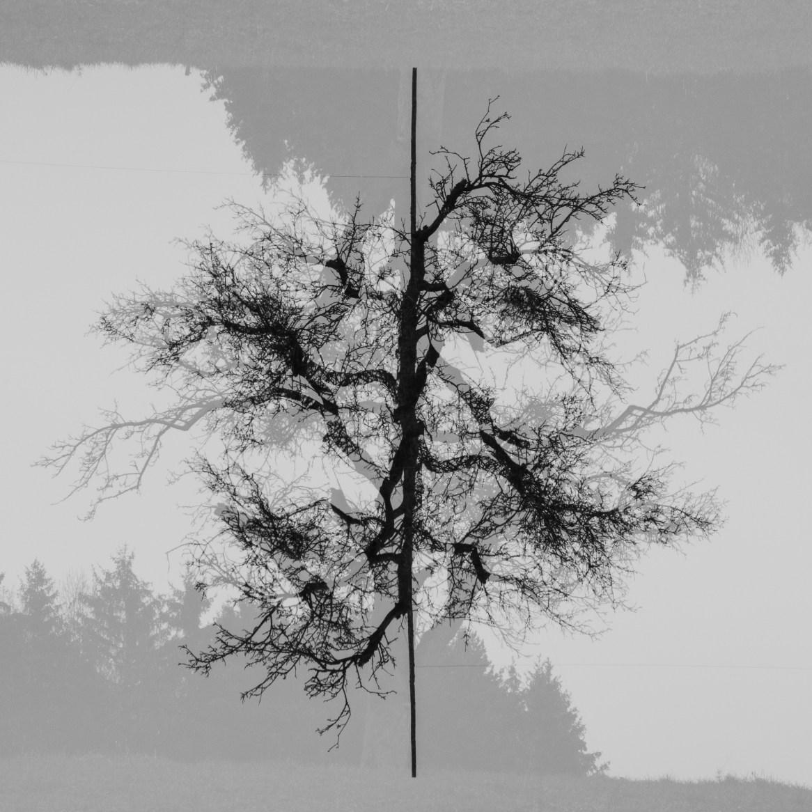 Week5-Landscape-Symmetry