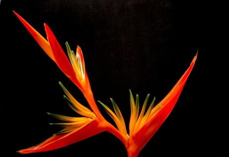 blossom-200933_1920