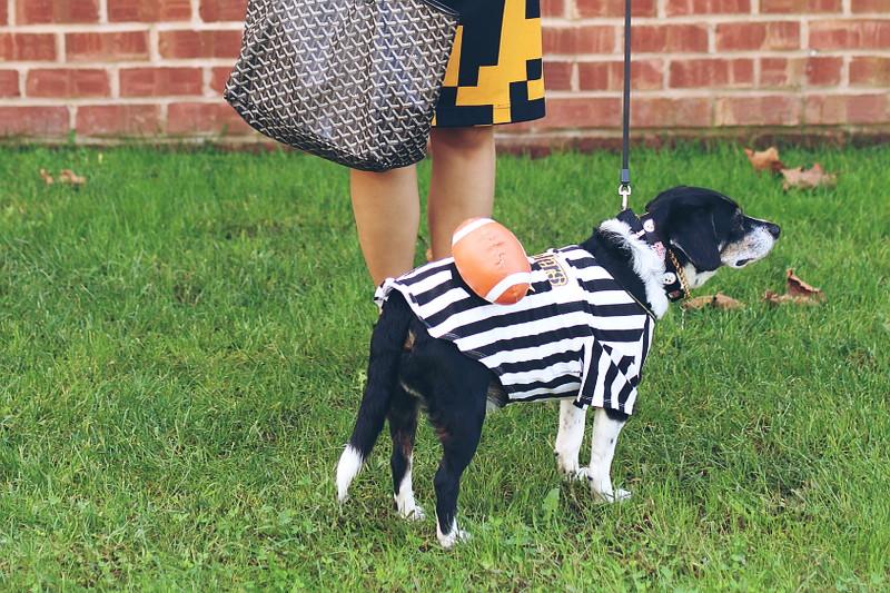 Black & Yellow + Dog Football Rufferee Halloween Costume