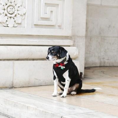 Best Paw Forward + DIY Bowtie for Dogs