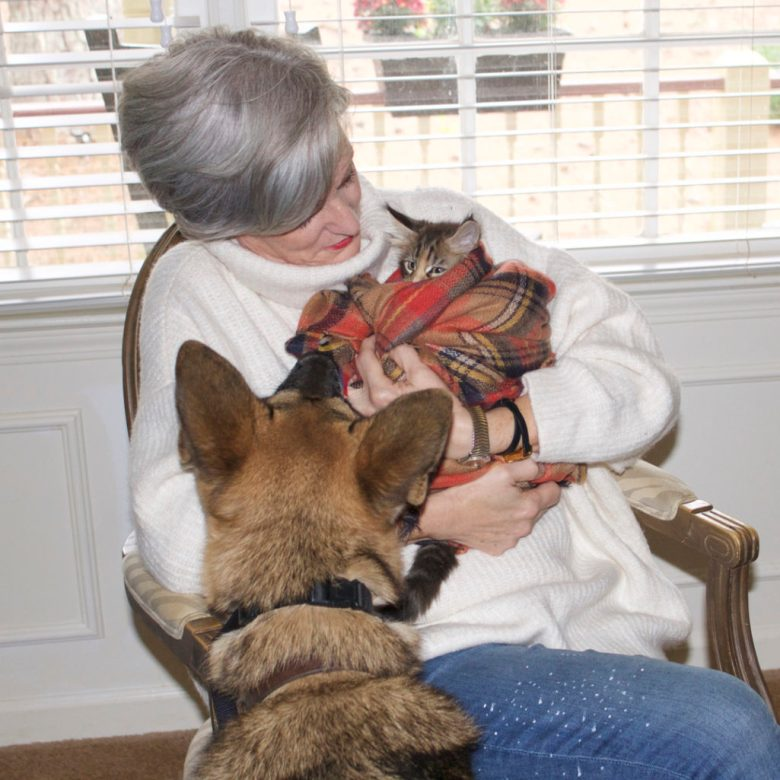 maine coon cats and german shepherds