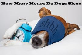 how many hours do dogs sleep