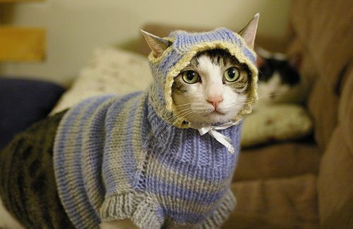 Unless you're looking to make a tiny, adorable cat sweater, never put wool in the washer machine.